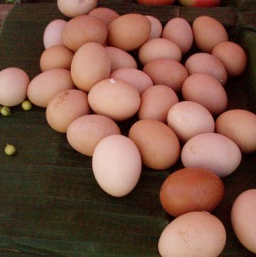 Ask Casey: Large Eggs vs. Extra Large Eggs