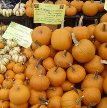 sugar sweet pumpkin, farmer's market