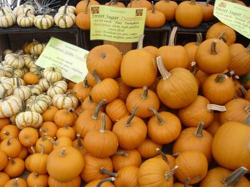 sugar sweet pumpkin, farmer's market
