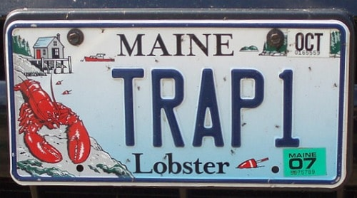 maine, lobster