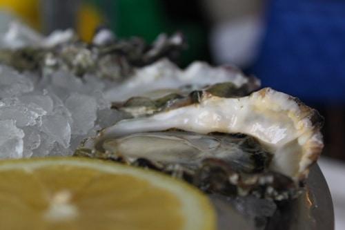 stellar bay oysters