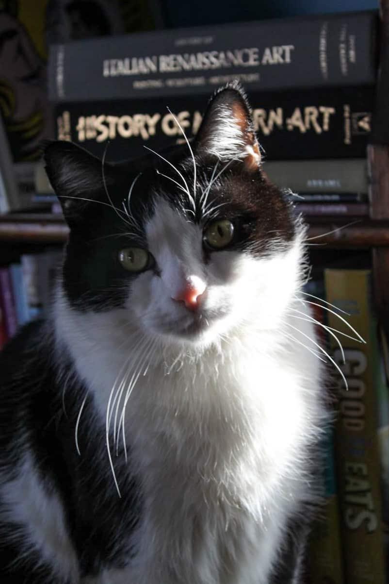 tuxedo cat in a sunbeam