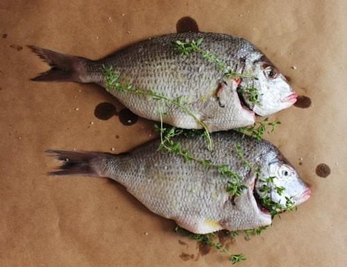 Grilled whole north carolina porgy carolina meat fish co for Porgy fish recipe