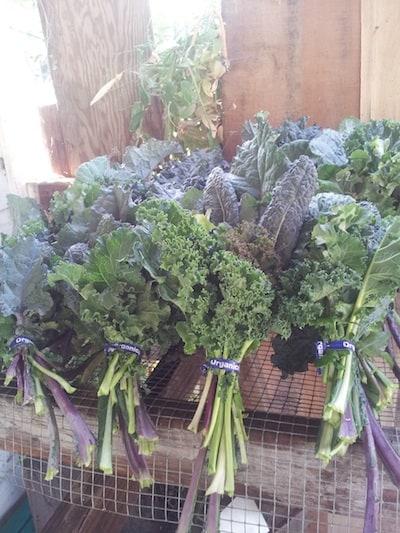organic kale, via www.www.goodfoodstories.com