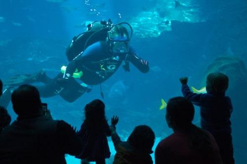 diver at the Georgia Aquarium