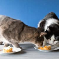 Cat Birthday Cake Treats