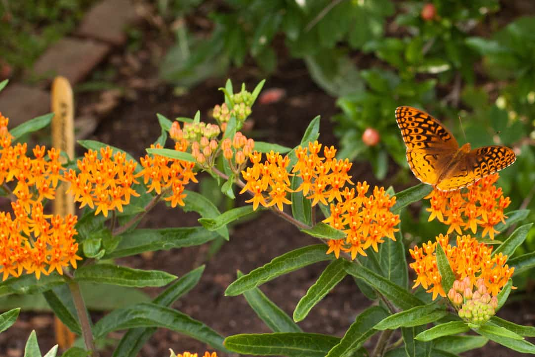 flowers at Thomas Jefferson's Monticello, via goodfoodstories.com