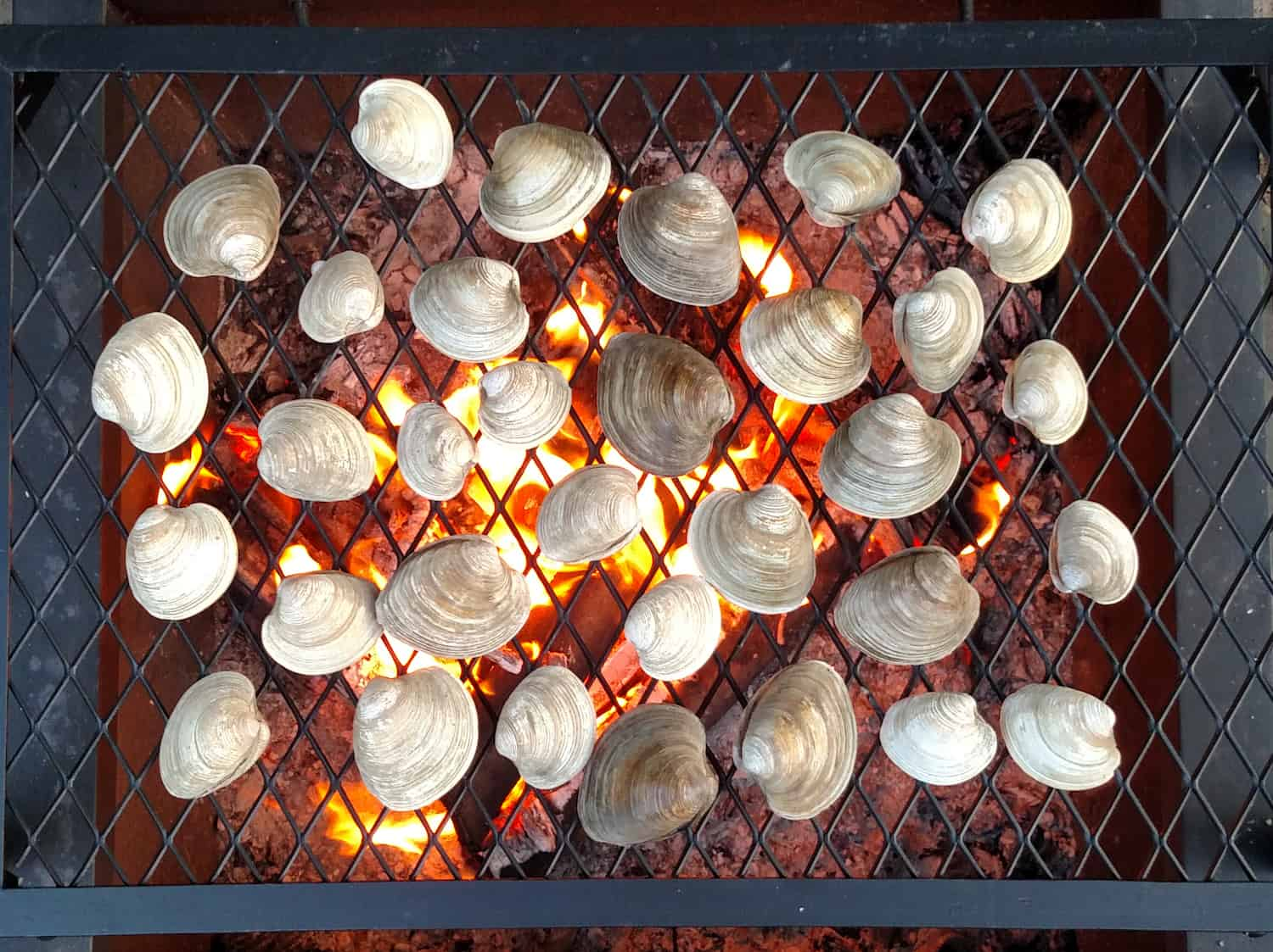 clams on a fire pit grate
